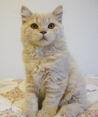 Купить корм для кошек Роял Канин | Royal Canin